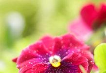 Garden Decorating Tips For Spring