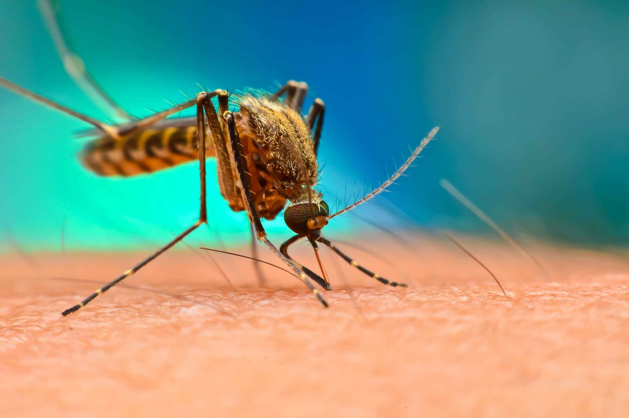 Disease Review: Malaria