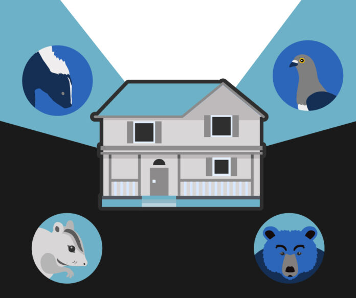 Seven Animals With the Potential to Cause Lots of Damage to Your Home