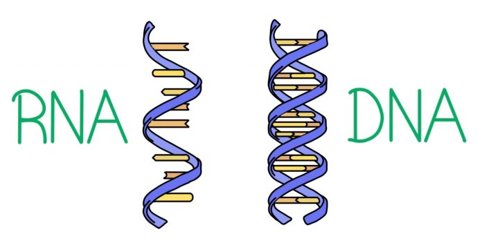 What Is the Concept Behind RNA And DNA Functioning